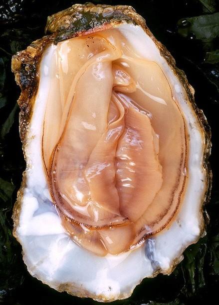 oysterhell.jpg