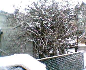 snowattack121908008