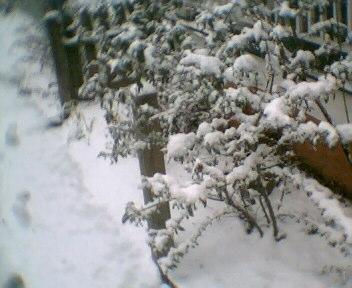 SnowWarJournal121908014